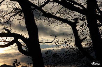 Feuilles et branches au crépuscule