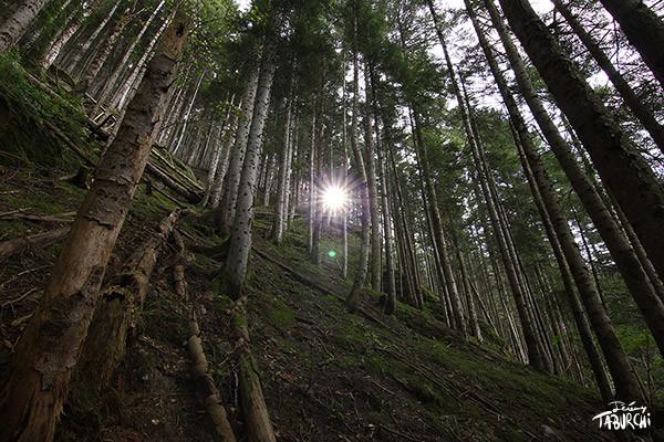 Une forêt du Bois Noir