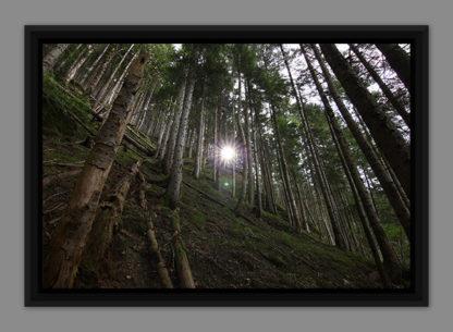 Une épaisse forêt, photo dans caisse américaine