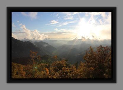 Cimes et soleil, photo dans caisse américaine
