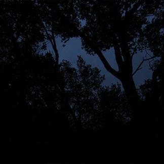 Nuit sombre dans une forêt