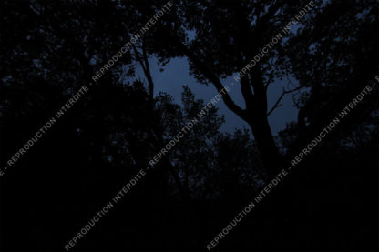 Dark night in a forest