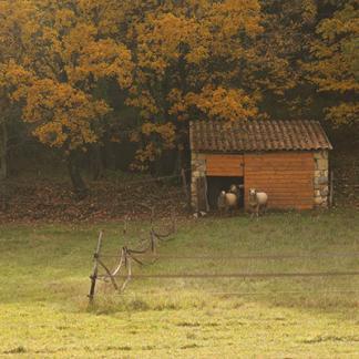 Paysage d'automne avec brebis