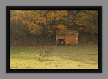 Autumn landscape with ewes, picture in American box